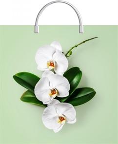 Пакет с пластик.ручками 36х37  Орхидея на салатовом  (100) ТИКО